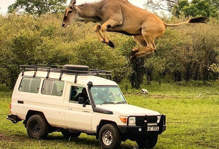 Jumped Over by an Eland, Shrinking of Rangelands